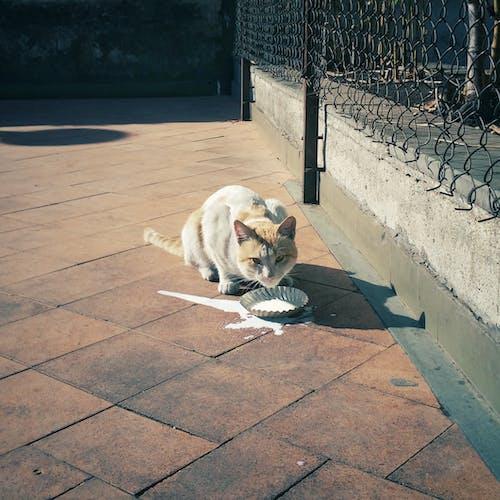 Fotobanka sbezplatnými fotkami na tému mačka, mlieko, smartfón