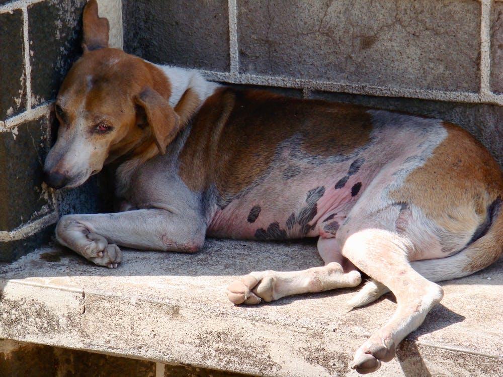 #dog, animal photography, poverty