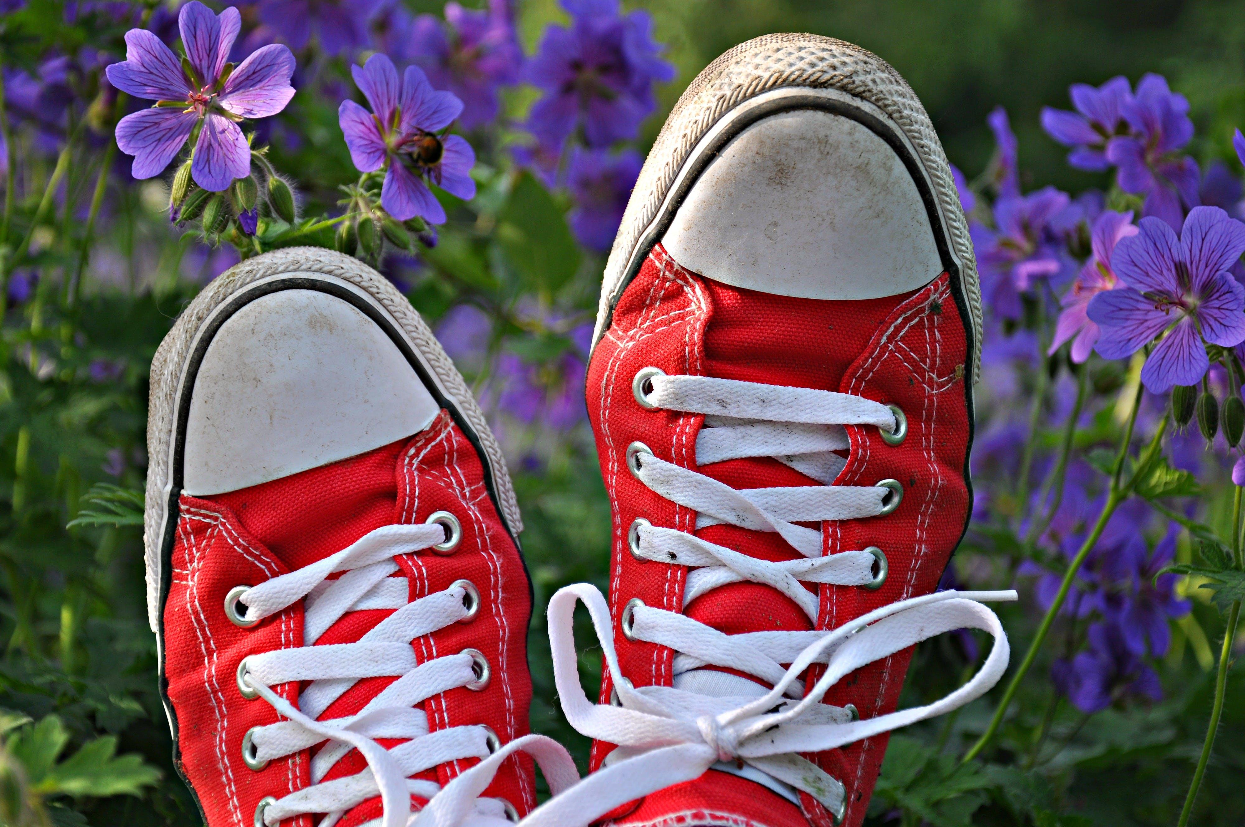 Gratis lagerfoto af bane, beskidt, blomster, close-up