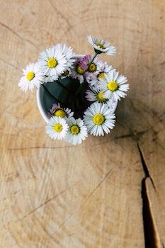 Kostenloses Stock Foto zu blumen, sommer, textur, bunt