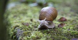 snail, shell, slug