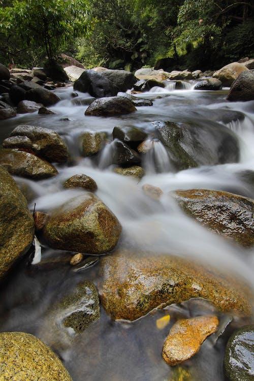 Δωρεάν στοκ φωτογραφιών με βράχια, δάσος, νερό, ξύλα