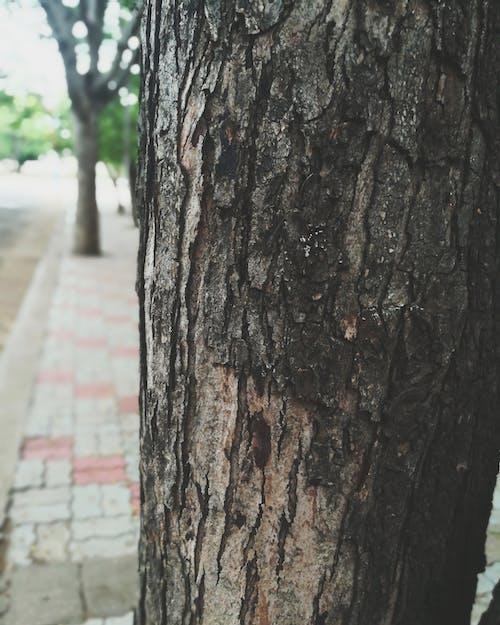 Free stock photo of empty street, tree bark, woods