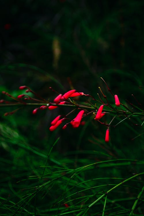Free stock photo of africa, beautiful red flowers, flower cluster, red and green plants