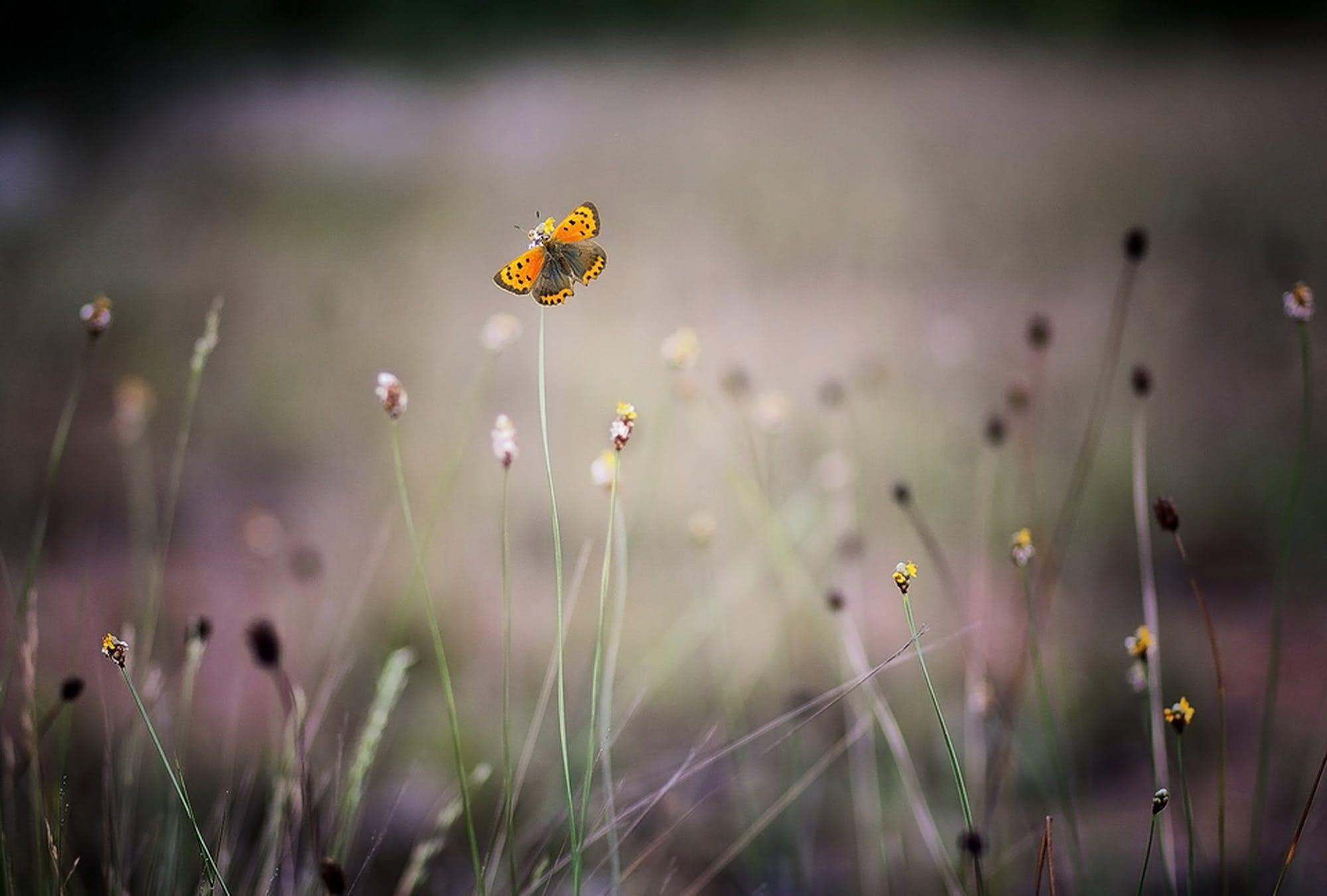 คลังภาพถ่ายฟรี ของ ดอกไม้, ทุ่งหญ้า, ธรรมชาติ, ป่า