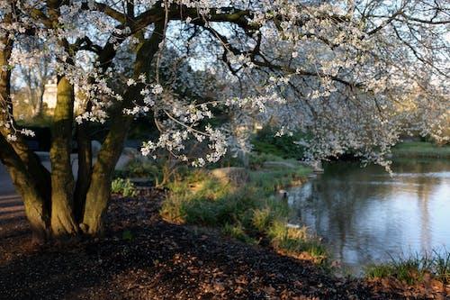 คลังภาพถ่ายฟรี ของ การถ่ายภาพธรรมชาติ, ดอกไม้, ธรรมชาติ, วอลล์เปเปอร์ธรรมชาติ