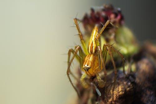 Foto d'estoc gratuïta de aranya, fons de pantalla de la natura, fotografia de natura, fotografia macro