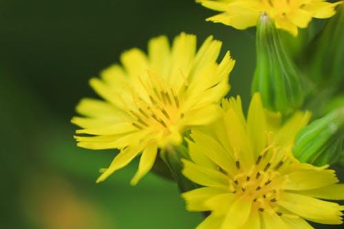黃色的花瓣花