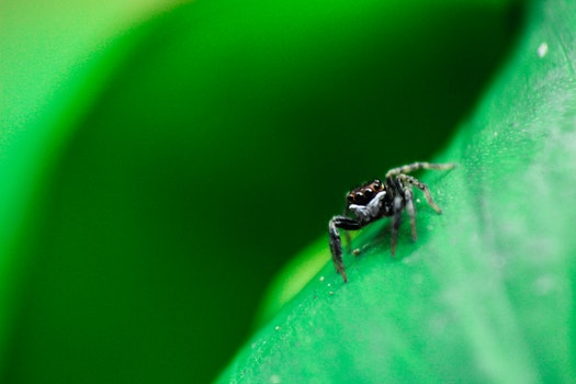 Shallow Focus Photography of Black Spider
