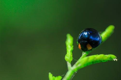 Foto d'estoc gratuïta de bonic, fotografia macro, insecte, insectes