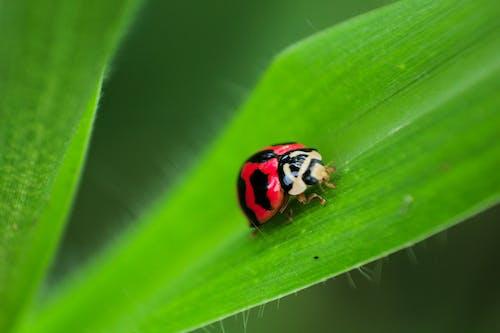 Foto profissional grátis de besouro, biologia, cheio de cor, colorida
