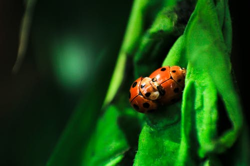 Gratis arkivbilde med biologi, dyreliv, grønn, insekter