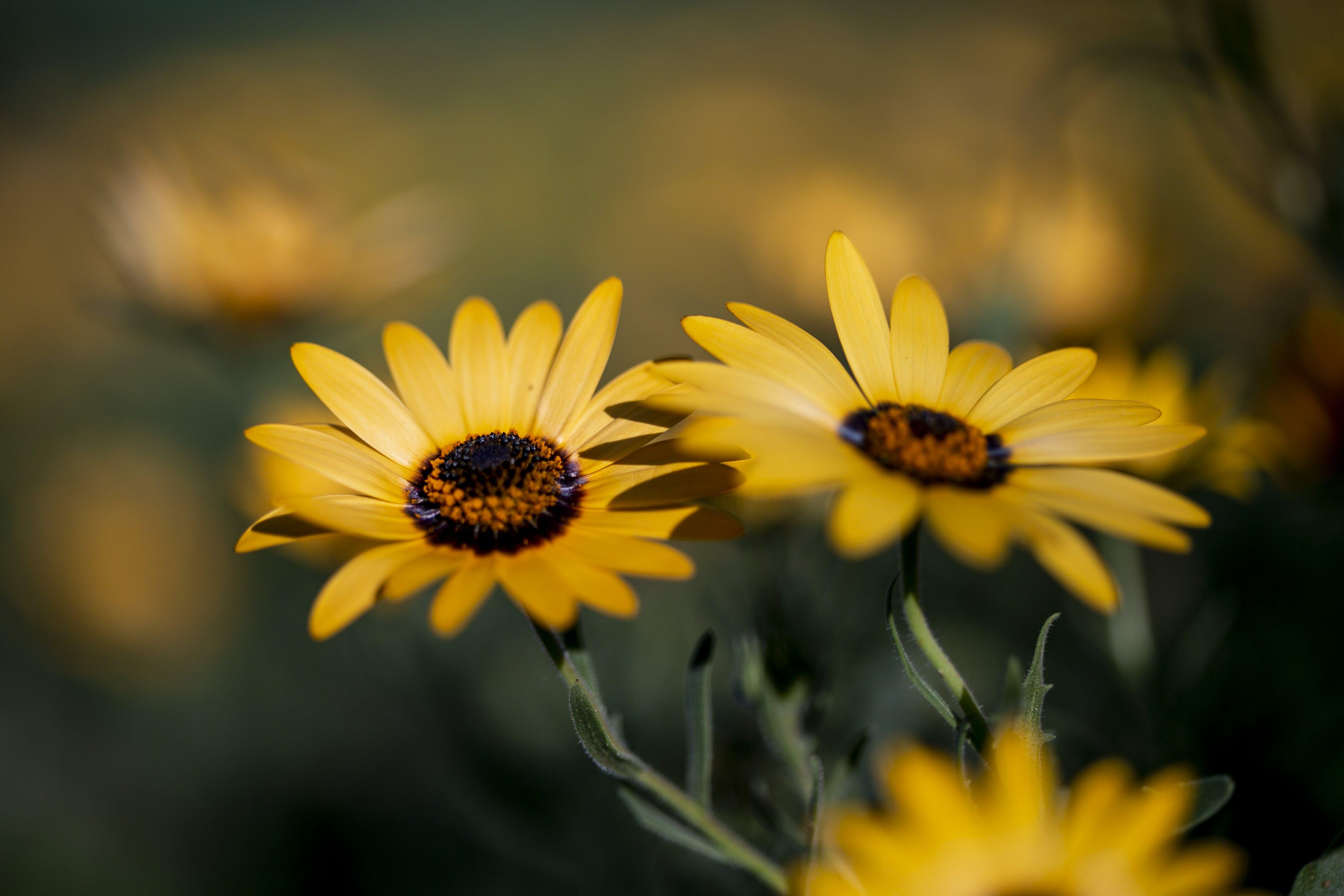 Free stock photo of flowers, yellow, yellow flowers, yellow flower