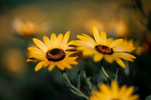 Ingyenes stockfotó gyönyörű virágok, sárga, sárga virág, sárga virágok témában