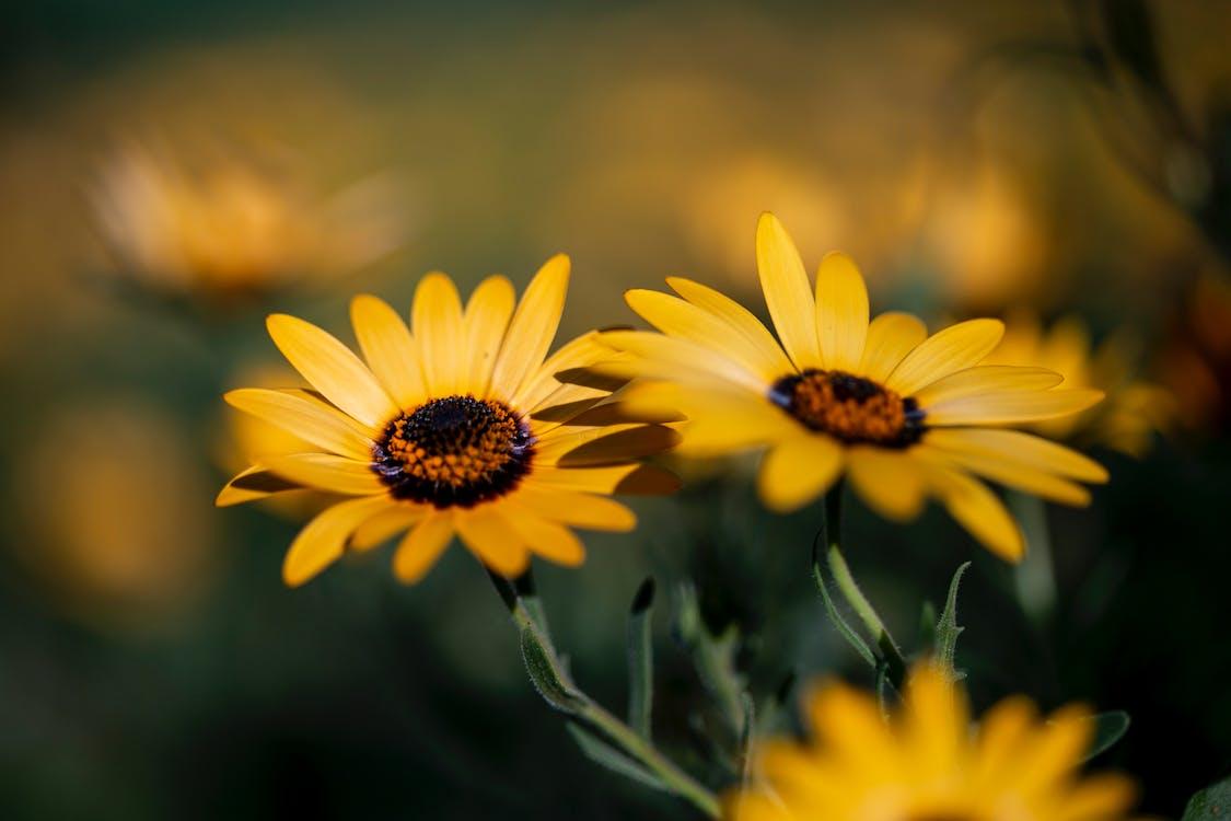 gyönyörű virágok, sárga, sárga virág