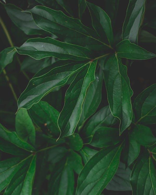 màu xanh lá, sự phát triển, thực vật