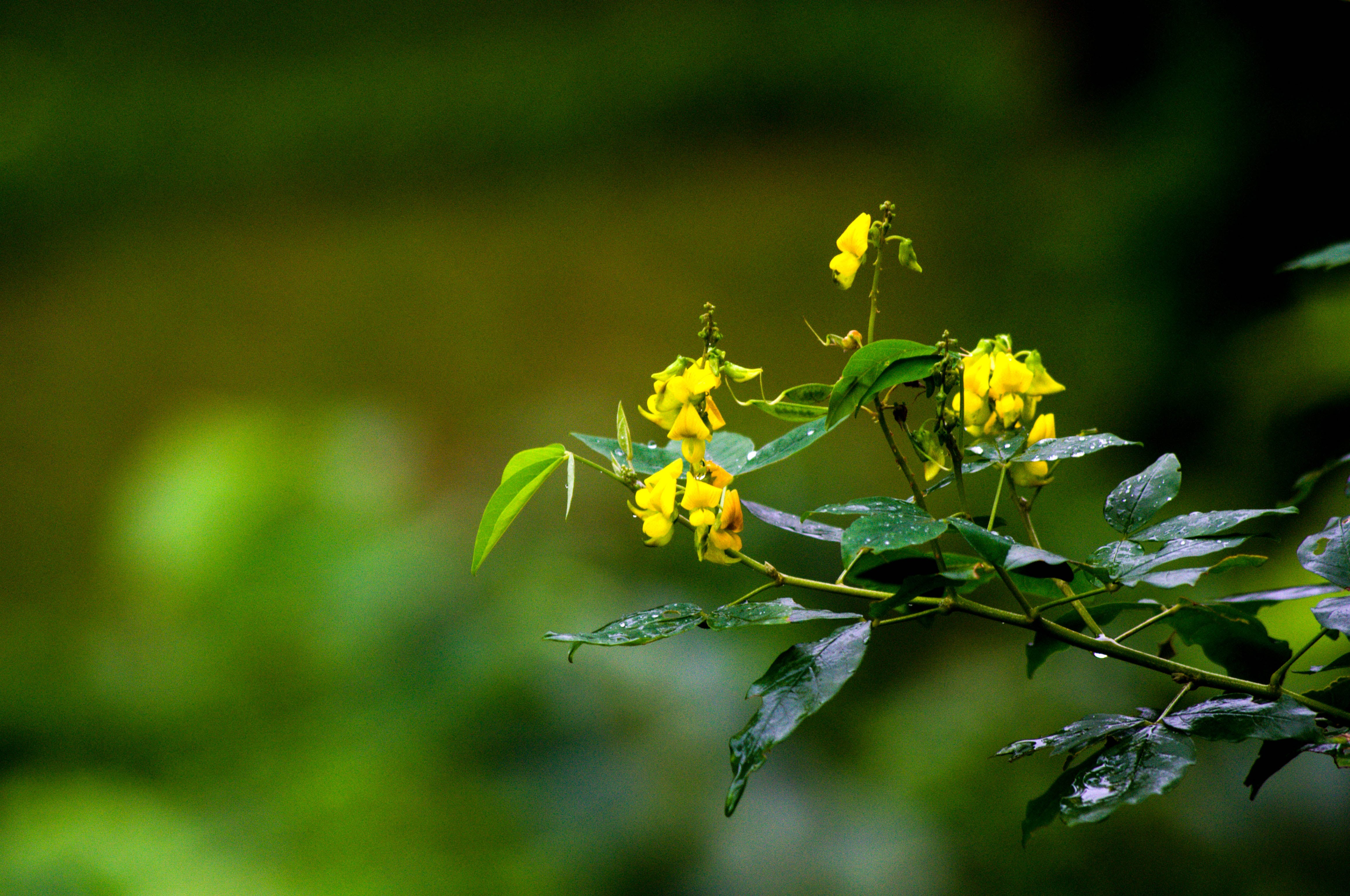 Free stock photo of landscape, nature, flowers, yellow