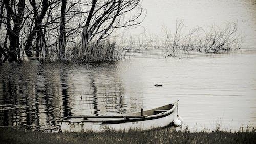 Kostenloses Stock Foto zu βαρκάδα, σκάφος, rowboat