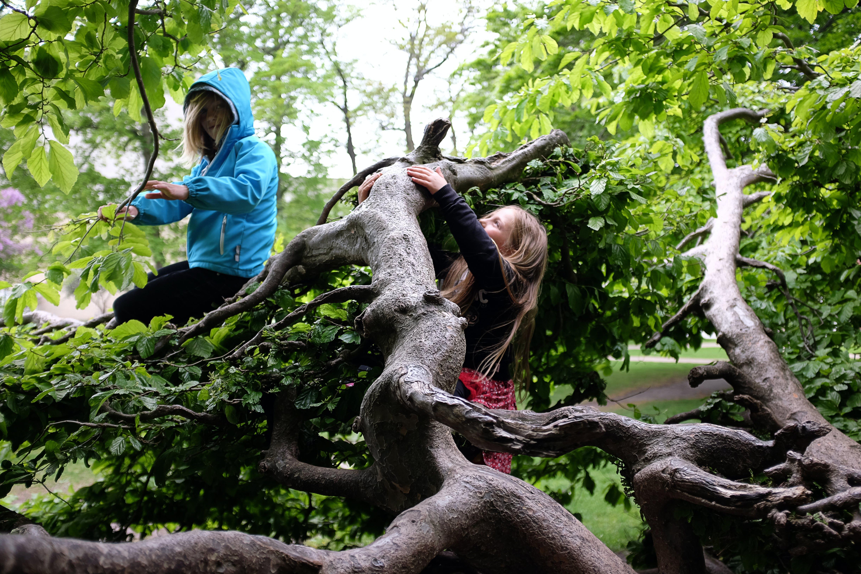 Free stock photo of climbing, green, kids, spring