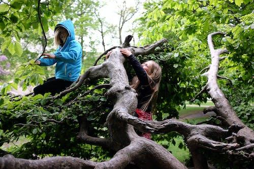 คลังภาพถ่ายฟรี ของ การปีน, สวีเดน, สีเขียว, เด็กๆ