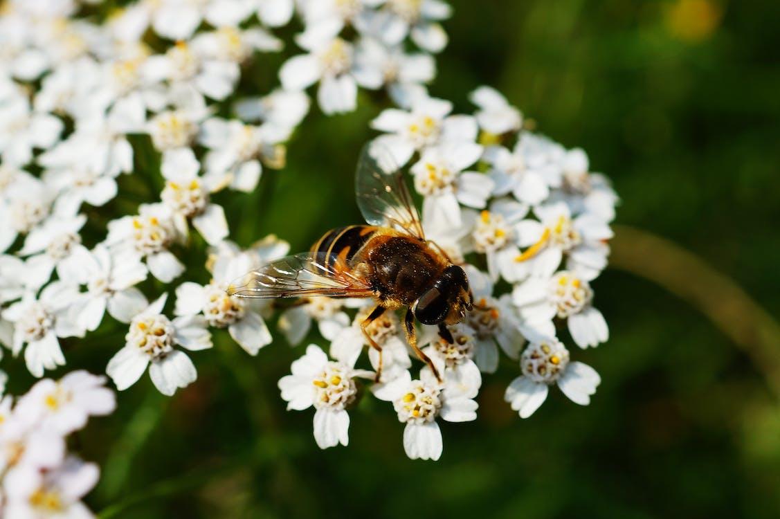 곤충, 꽃, 꽃가루