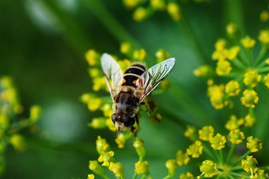 Bee Nearby Yellow Cluster Petal Flower