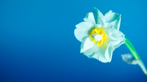 Kostenloses Stock Foto zu αγριολούλοδδα, μπλε λολλούδι, όμορφα λολλούδια