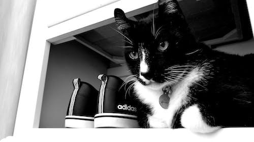 Gratis stockfoto met kat, katje, katjes, katten