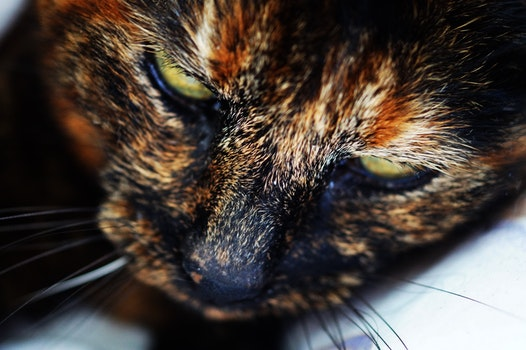 Photography of Orange Brown and White Face of Cat