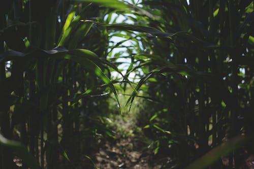 Imagine de stoc gratuită din centrale, fermă, iarbă, natură