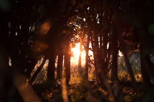 Foto stok gratis alam, cahaya, dedaunan, hutan