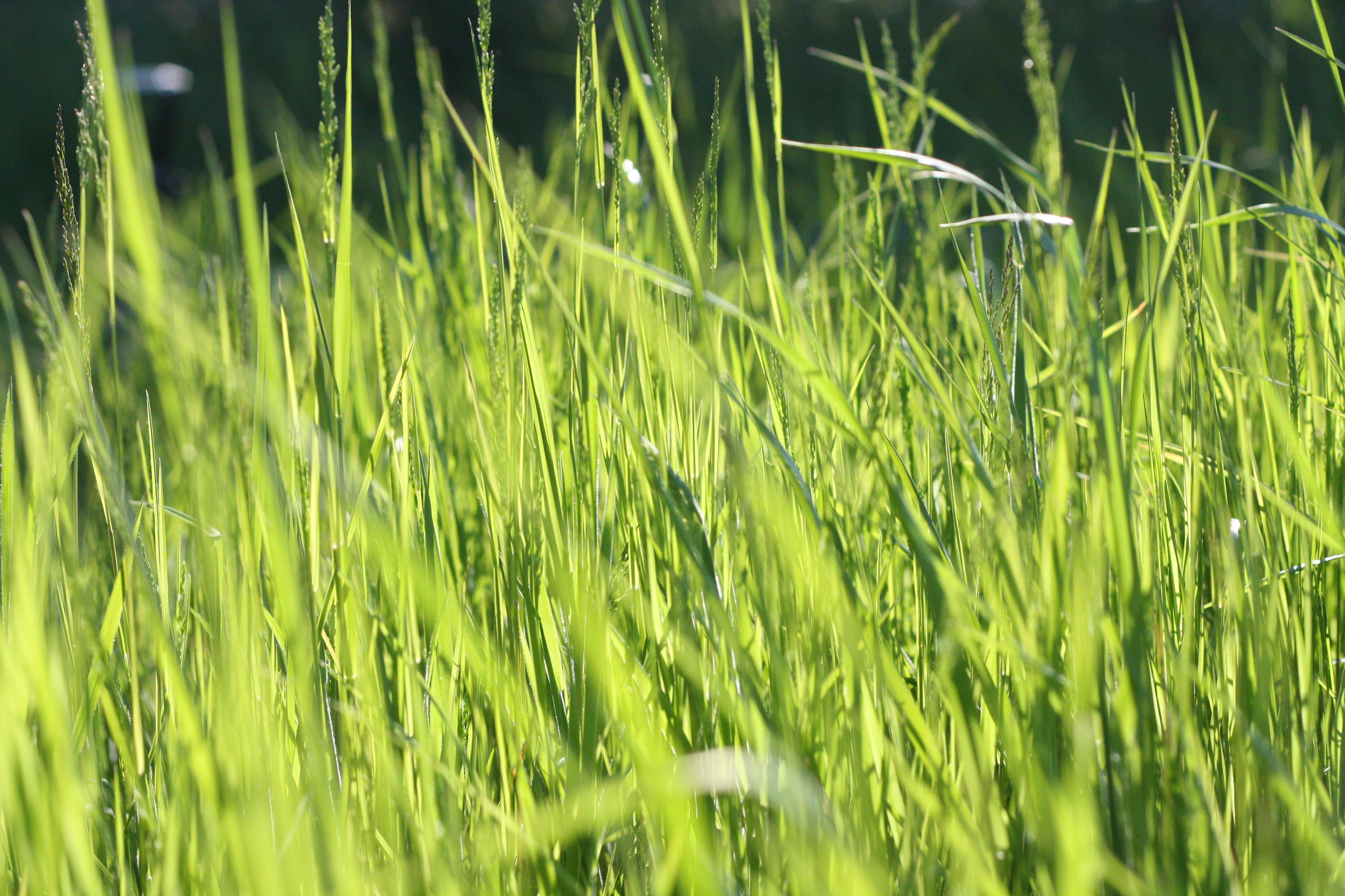 ぼかし, フィールド, 夏, 天気の無料の写真素材