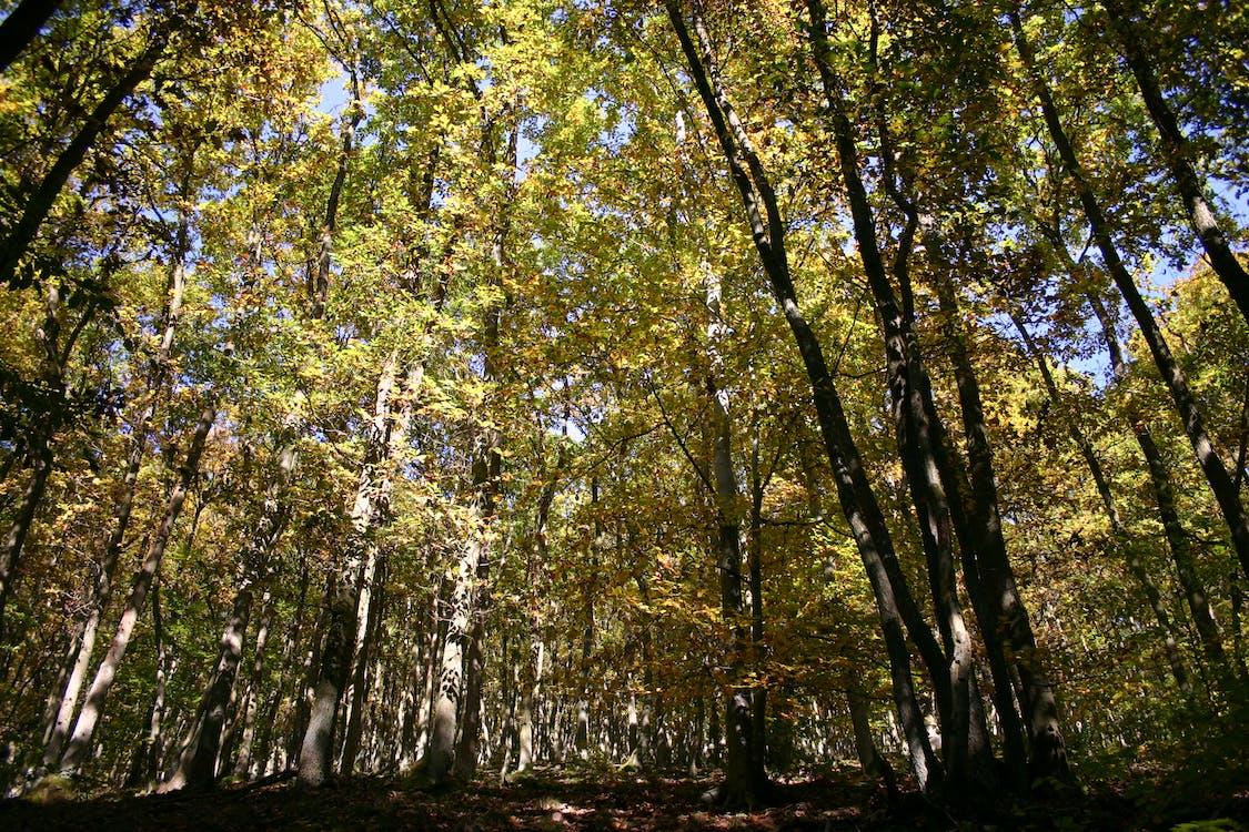 hutan, pohon
