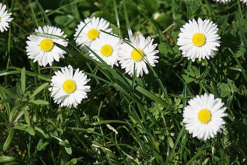 Gratis arkivbilde med åker, anlegg, blomster, blomsterblad