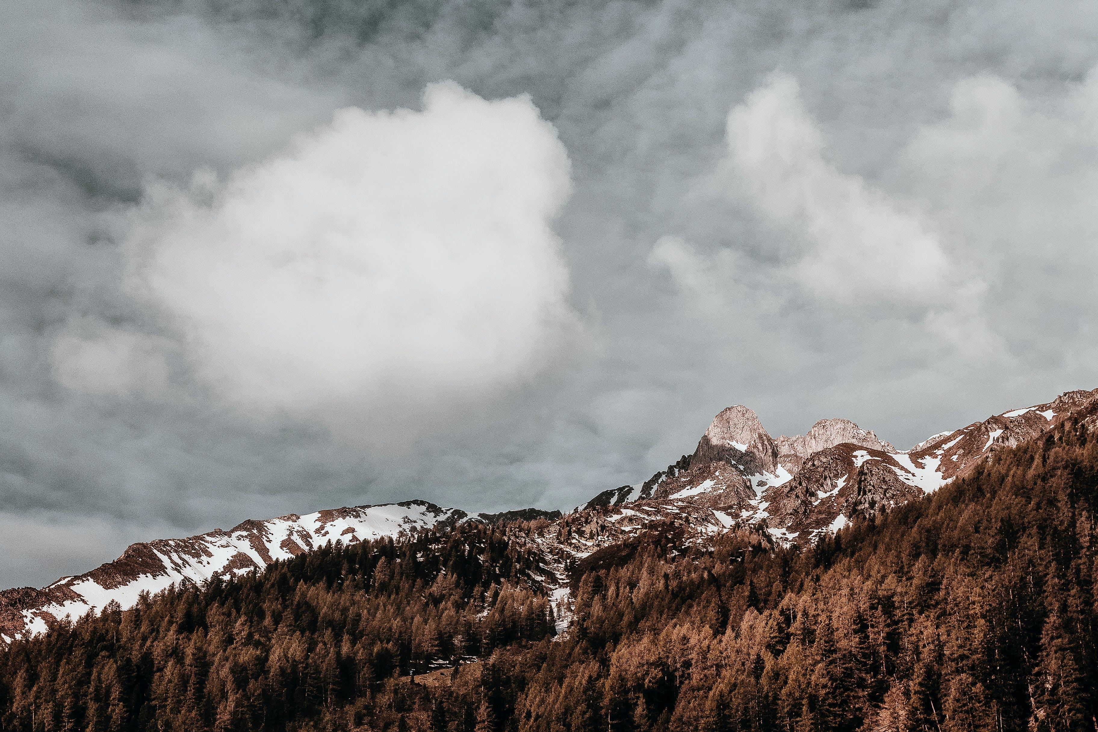 Immagine gratuita di alba, alberi, avventura, cielo