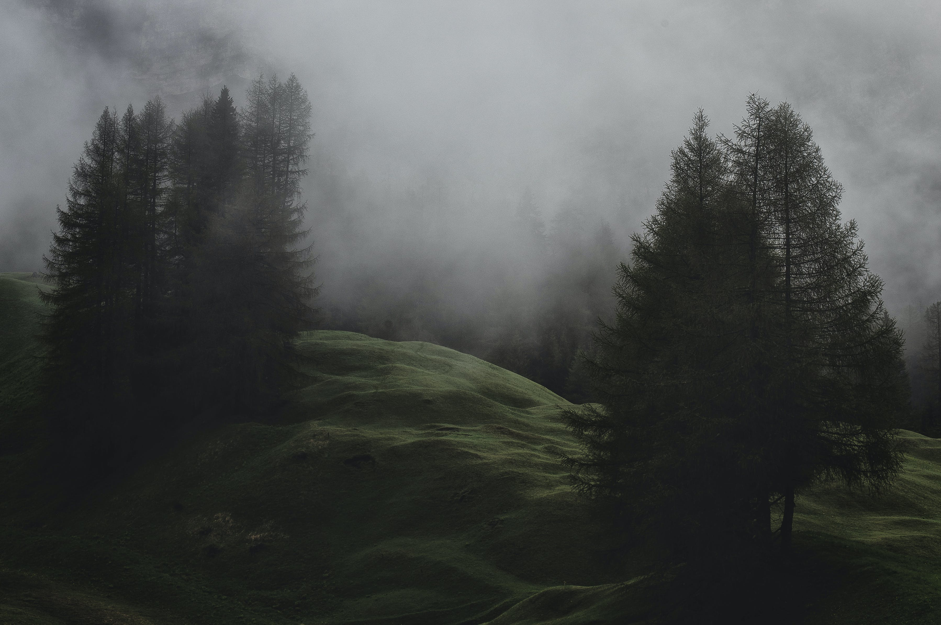 Low-light Photo of Mountain With Pine Trees Covered With Fogs