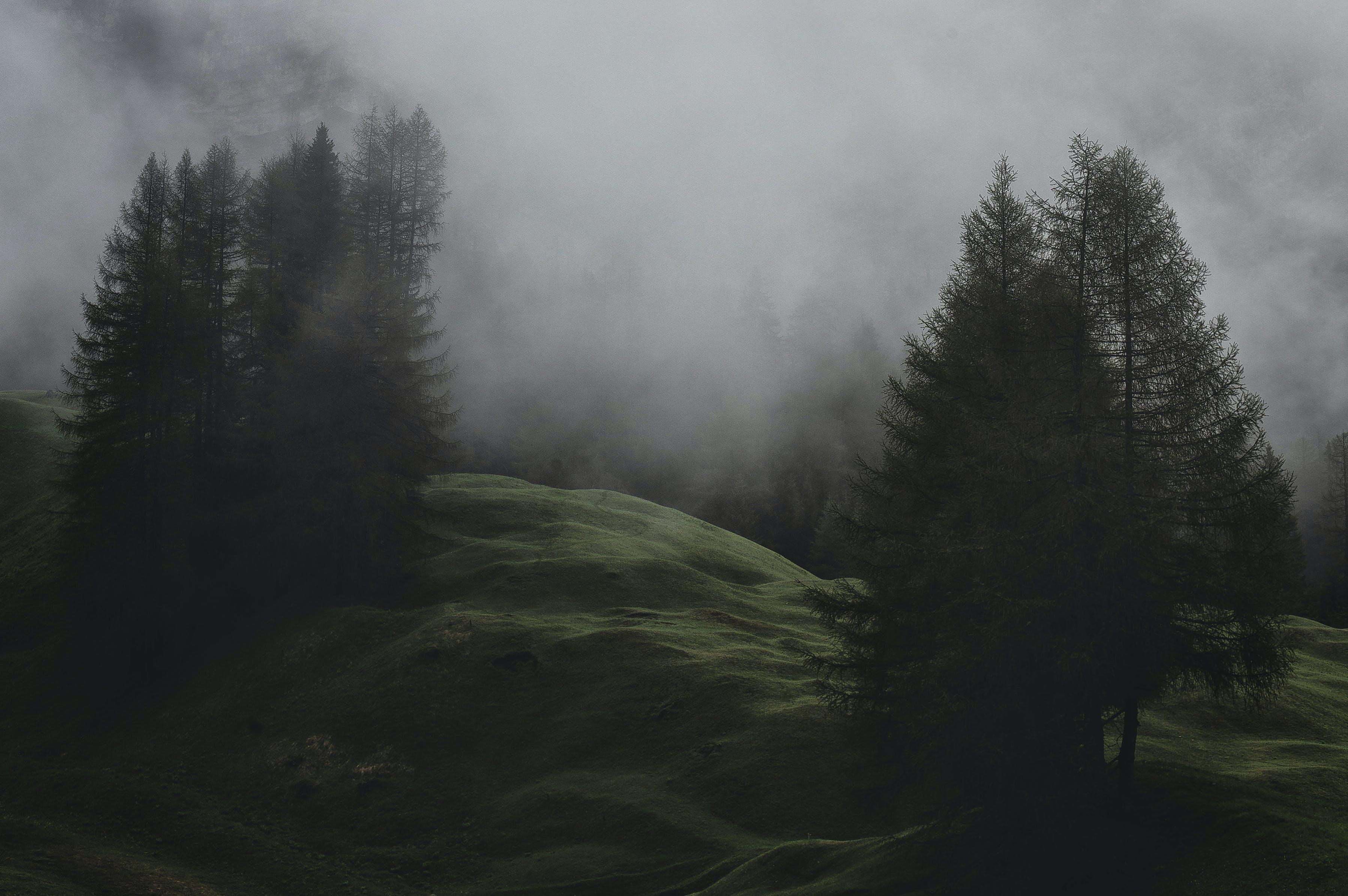 Gratis arkivbilde med bartre, eviggrønn, forkjølelse, HD-bakgrunnsbilde