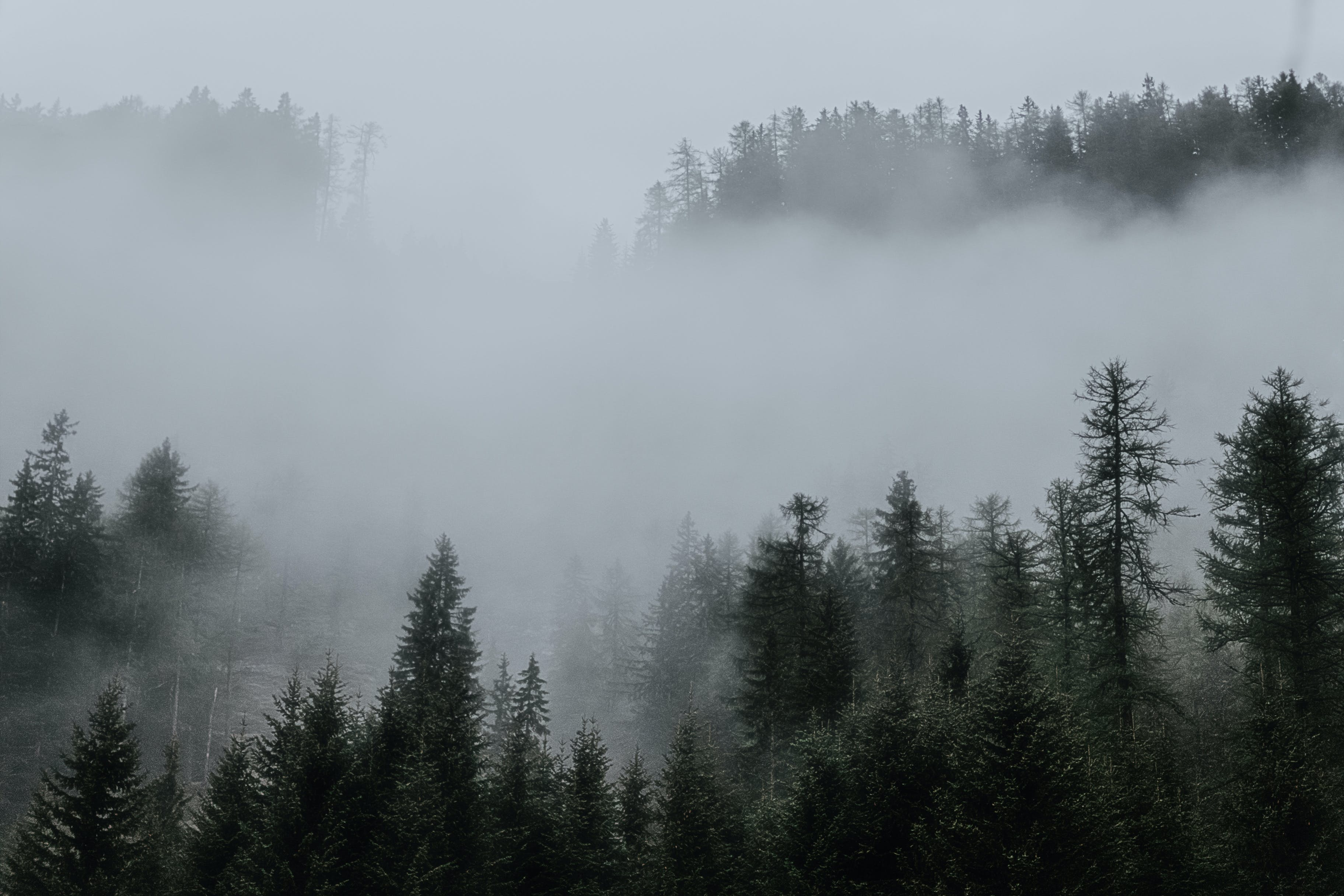 Trees Surrounded by Fogs in the Forest