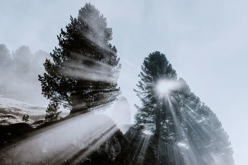 Darmowe zdjęcie z galerii z drzewa, mgła, promień słońca, światło słoneczne