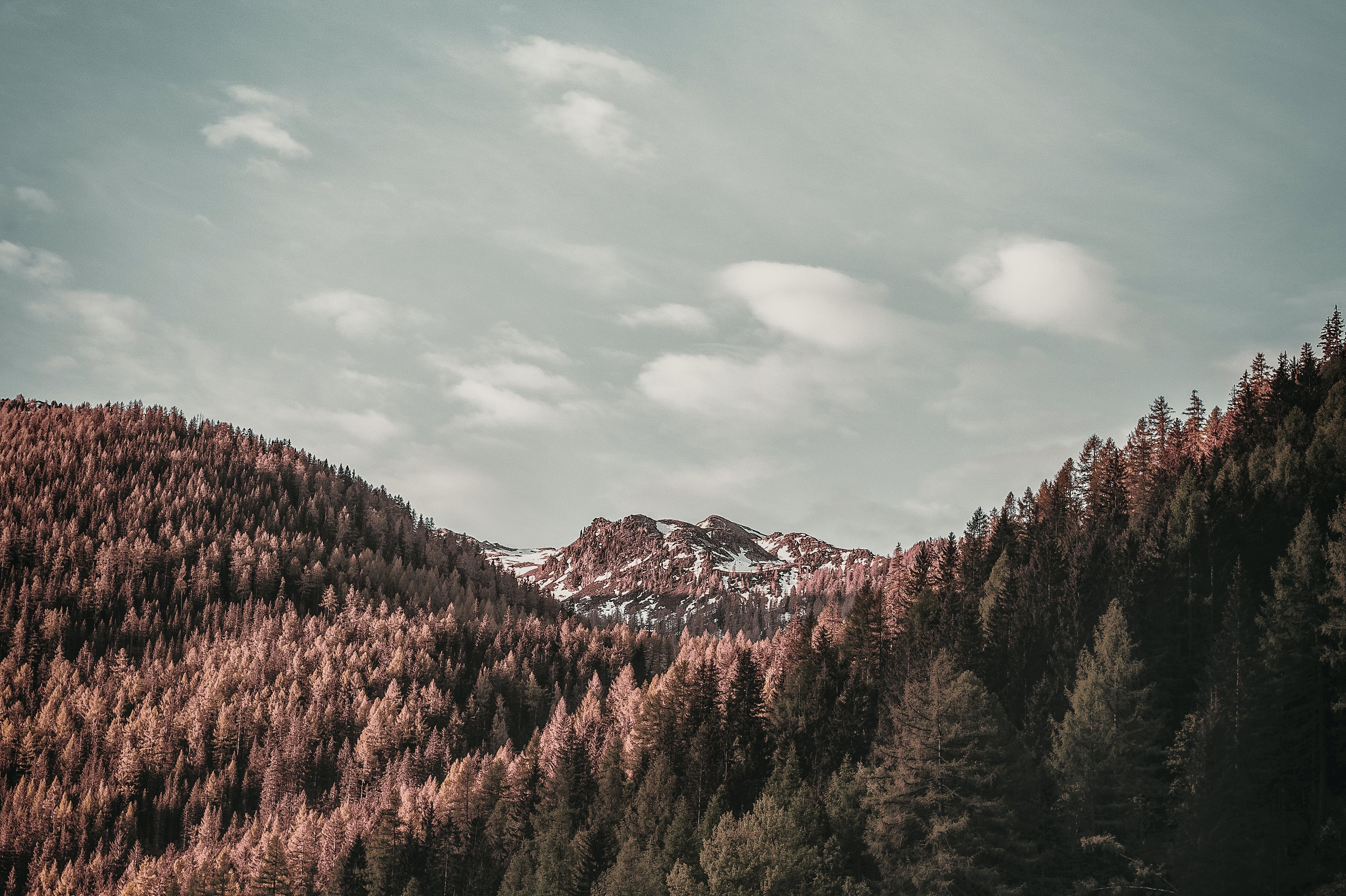 Brown Leafed Trees on Top of Mountain