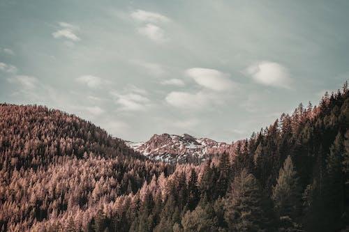 Foto profissional grátis de alvorecer, árvores, cênico, com frio