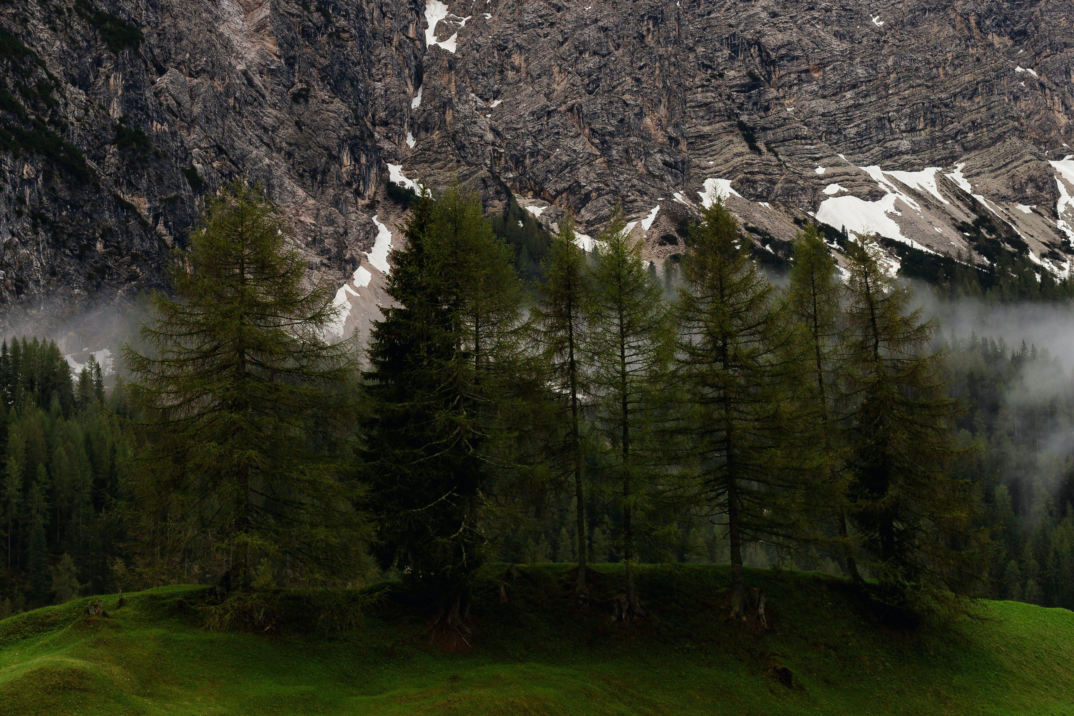 Ảnh lưu trữ miễn phí về cây, có sương mù, Hình nền HD, hình nền mac