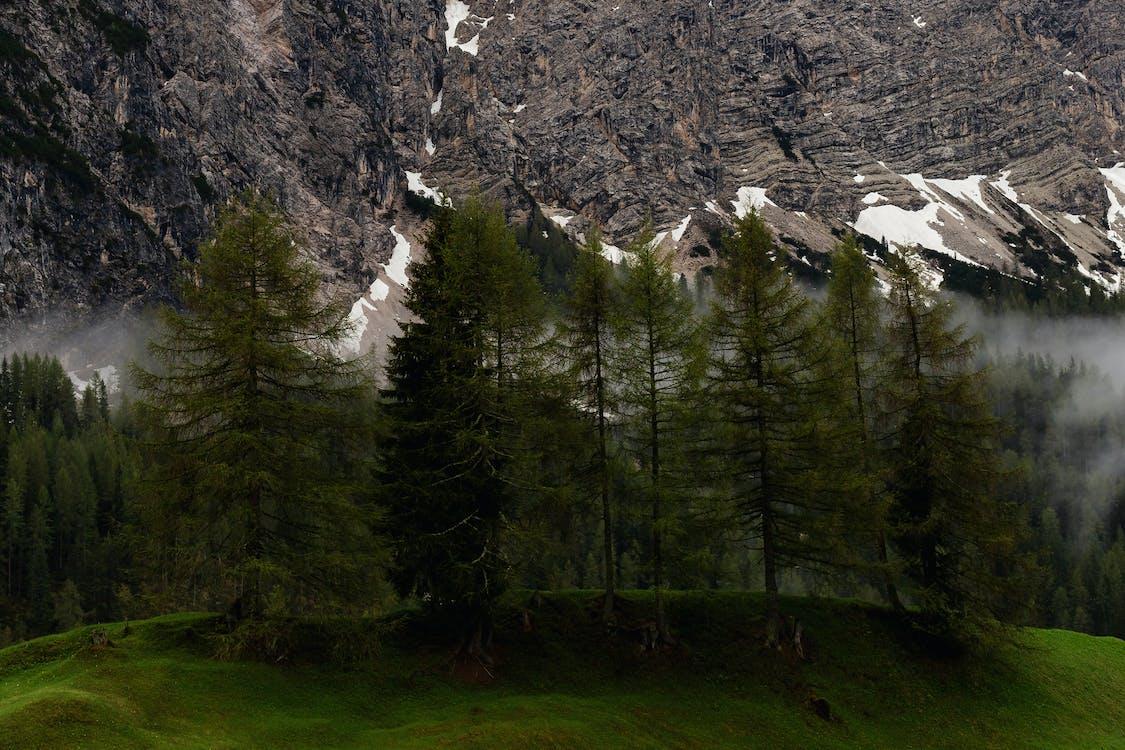 βουνό, δέντρα, ομίχλη
