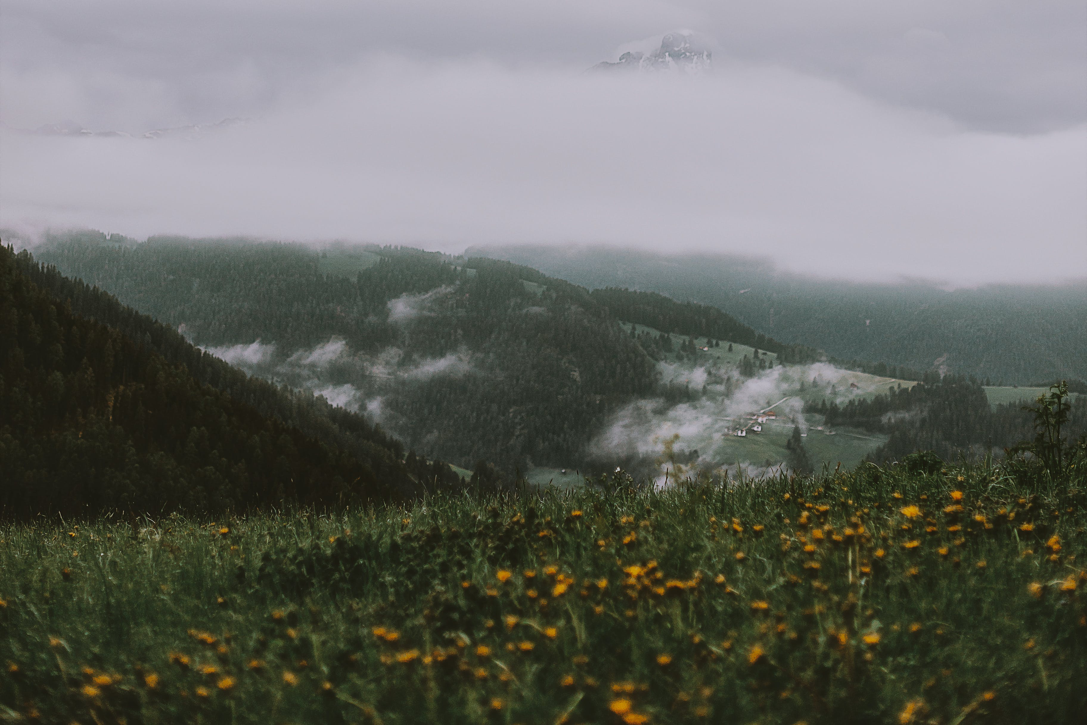 Yellow Flower Field Near Mountain Under Grey Sky