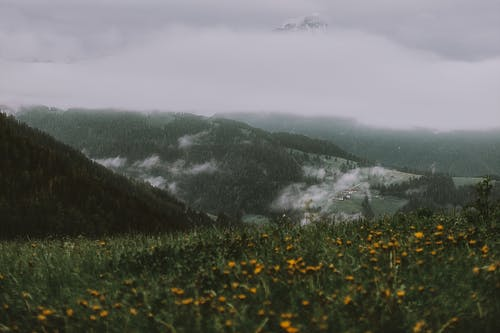 Yellow Flower Field Near Mountain Under Grey Sky
