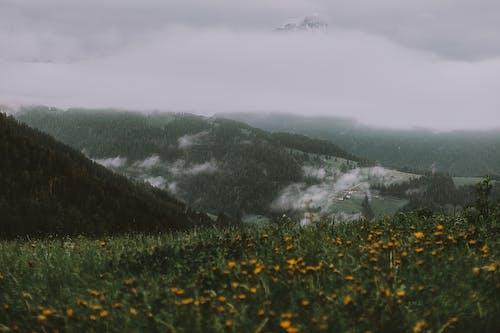 Foto profissional grátis de alvorecer, área, árvores, campo de feno