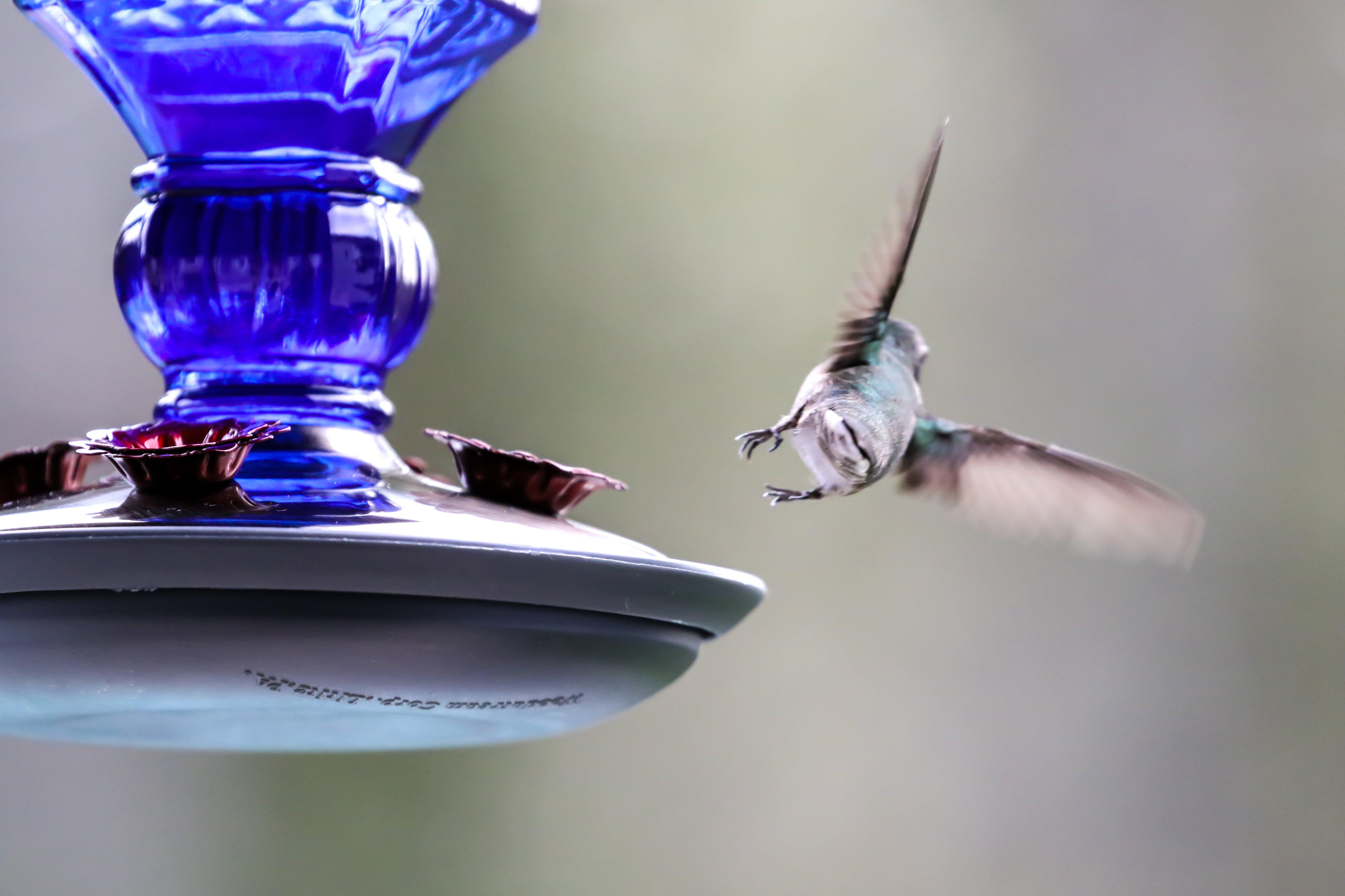 Foto d'estoc gratuïta de ales, colors, filmació a intervals, fons desenfocat