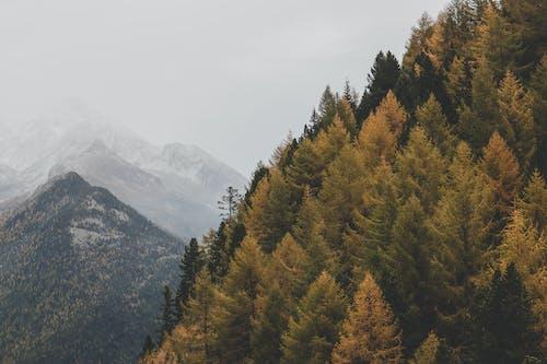 Foto d'estoc gratuïta de arbres, boira, bosc, boscos