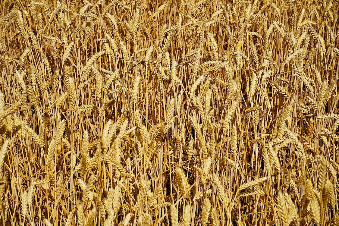 농경지, 농작물, 농장