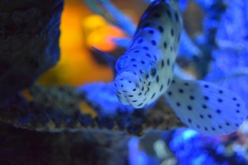 까만 점 물고기, 물고기의 무료 스톡 사진